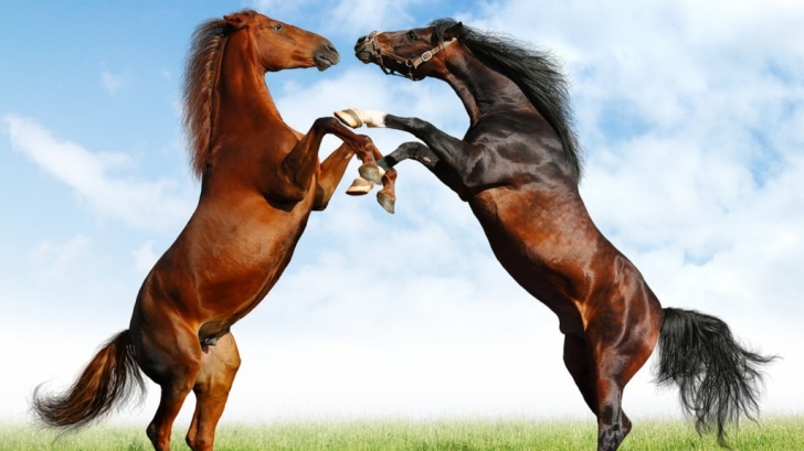 De ce sunt caii singurele animale cu un singur deget