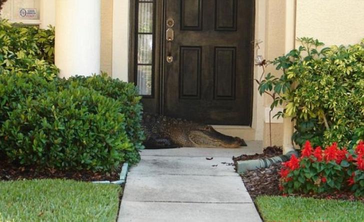 Au deschis ușa casei și au înlemnit! Doamne, nu pot să cred