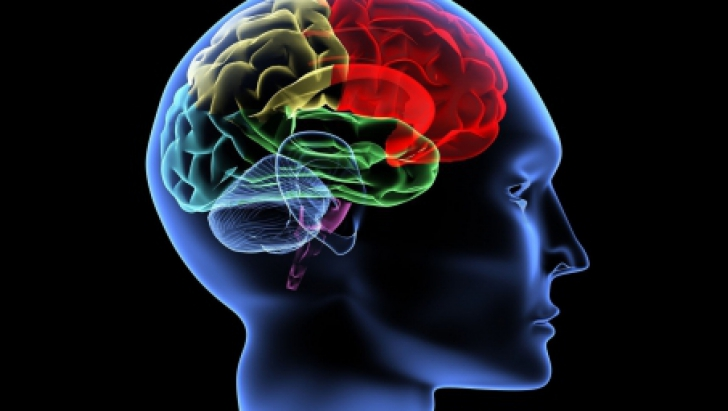 Află care este vârsta reală a creierului tău! Testul pe care toată lumea ar trebui să îl facă