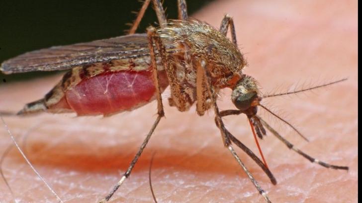 Te-a înțepat un țânțar la muncă? Iată cum poți primi 13.000 de euro