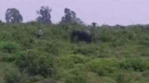 Elefantul furios