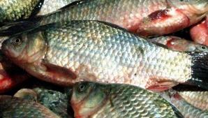 Percheziții în Capitală și în două județe la suspecți de evaziune în comerțul cu pește