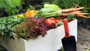 10 fructe şi legume de toamnă care fortifică imunitatea