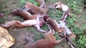 12 maimuţe au murit