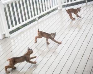 S-a trezit cu 8 pisici pe teresa casei. Când s-a uitat mai atent a încremenit: NU poate fi adevărat!