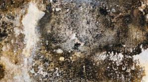 Simptome care îţi spun că eşti intoxicat cu mucegai
