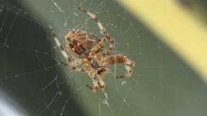 Planta care ţine departe şoarecii, păianjenii şi insectele din casă