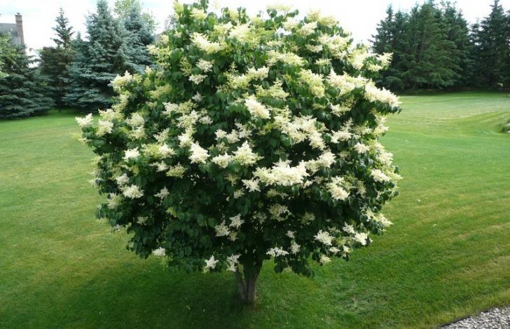 Copacul care te ajută să te eliberezi de energiile negative. Trebuie să îţi plantezi unul în curte!