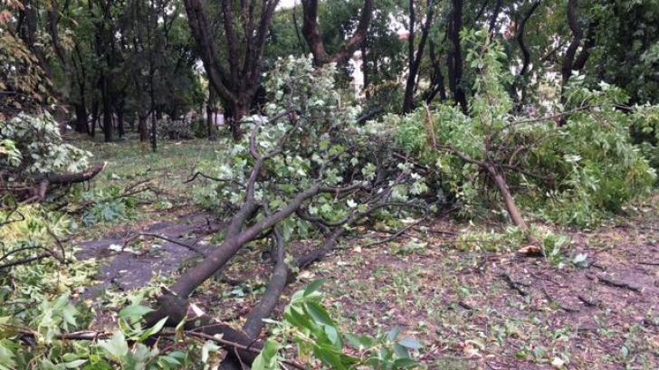 Cine sunt victimele furtunii de duminică. O familie întreagă a murit în parc la Buziaș