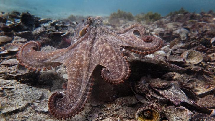 Descoperire fantastică: un oraș construit de caracatițe, găsit în abisul mării. Cum arată