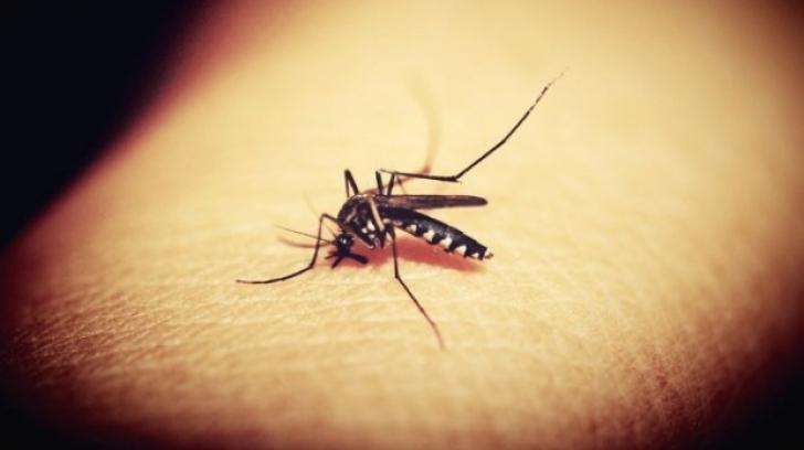 Virusul West Nile simptome