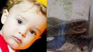 Halucinant! Un bebeluș a mușcat un șarpe veninos. Ce a urmat întrece orice imaginație
