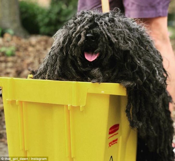 Cel mai amuzant costum pentru Halloween e purtat de...un câine