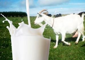 Laptele de CAPRĂ previne cancerul şi tratează o mulţime de boli. Cum trebuie consumat CORECT