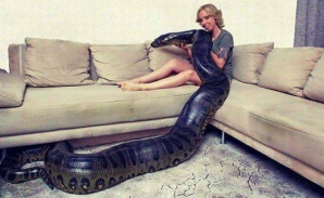 Tânăra aceasta şi-a cumpărat un şarpe uriaş ca animal de companie. Ce a urmat este IREAL!