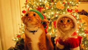 În ce zi pică anul acestea Crăciunul