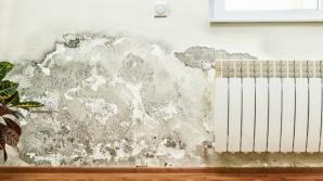 Cum poţi scăpa de mucegaiul din casă definitiv