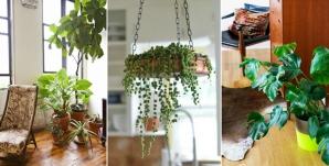 Plantele care aduc NOROC în casa ta. Cum să atragi prosperitatea