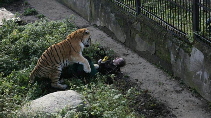 Tigru de la ZOO