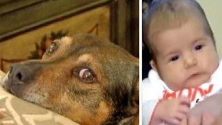 Câinele a început să urle şi să sară pe ei, în pat. Când s-au dus în camera copilului, ŞOC!