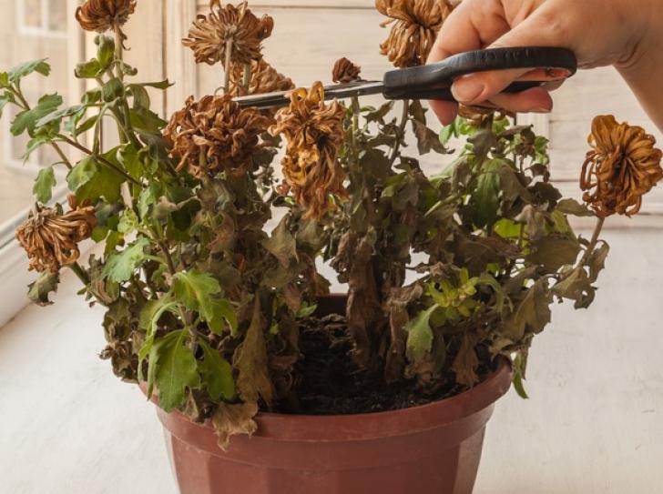 Cum să readuci la viaţă o plantă USCATĂ? Trei ingrediente simple fac minuni!