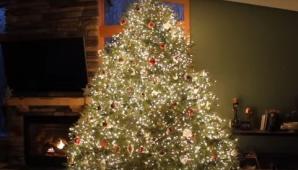 Arată ca un brad de Crăciun obişnuit. Ce se întâmplă când se sting luminile!