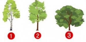 Testul copacului îți spune ce te așteaptă în 2018