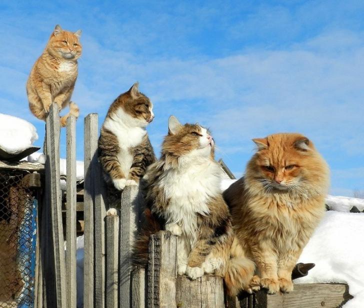 Pisicile au pus stăpânire pe locuința acestui cuplu. Sunt atât de multe, încât vizitatorii se sperie