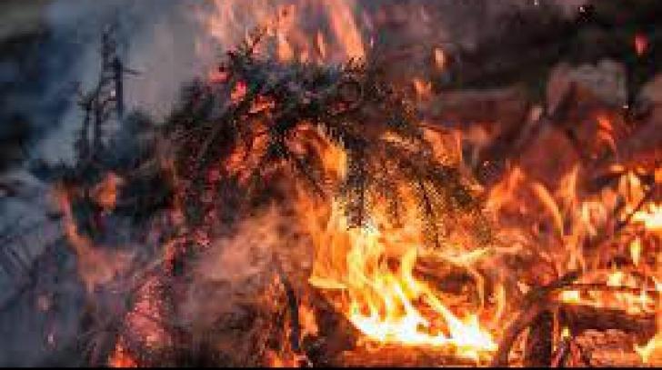 Pomul de Crăciun poate lua foc ușor! Află cum poți evita o catastrofă