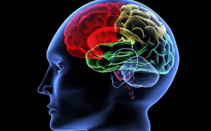 Ce se întâmplă cu creierul după ce mori