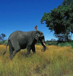 Tippi este un adevărat Mowgli din Cartea junglei