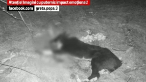 Câini ucişi cu puşca de vânătoare
