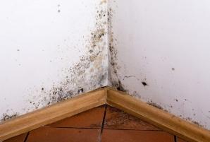 Mucegaiul din locuinţe - la ce boli eşti expus şi cum poţi scăpa de el