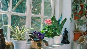Plantele care atrag banii şi prosperitatea în casă