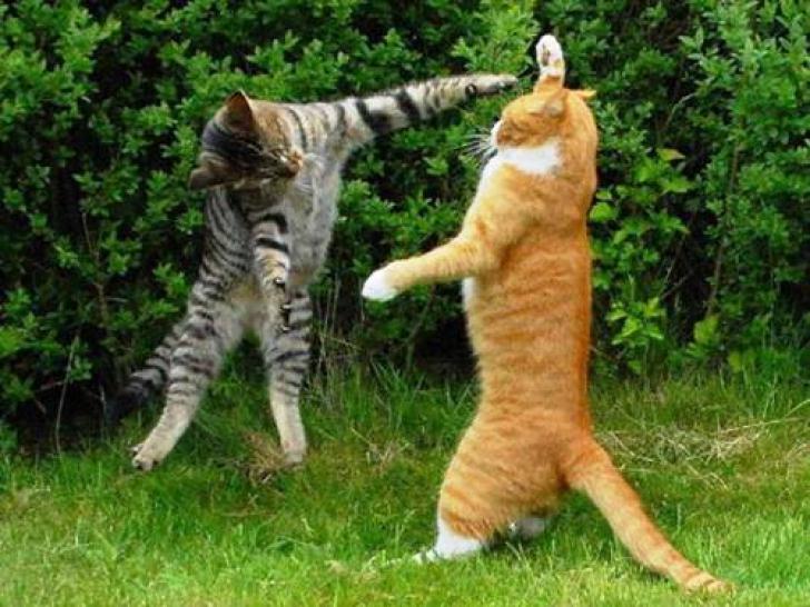 Cele mai amuzante imagini cu animale, de pe Internet