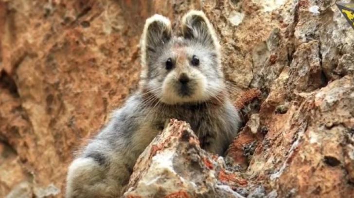 Au zis că au găsit un ursuleţ în munţi, dar s-au apropiat mai bine şi...ŞOC! N-au putut crede ce era