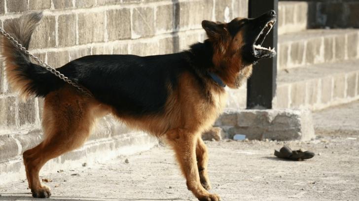 Femeie din Reşita, sfâşiată de câinele fiicei sale. Medicii i-au amputat braţele