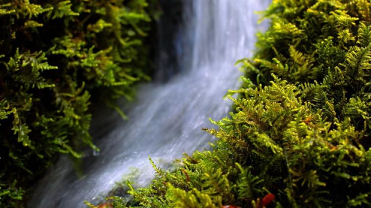Munţii Carpaţi, un fenomen unic pentru apele minerale