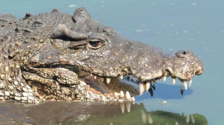 Erau în vacanţă. Dintr-odată a apărut un crocodil. Câinele familiei s-a propiat de el. Ce a urmat