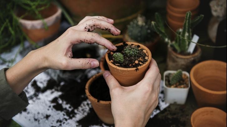 Trei moduri în care-ți distrugi plantele din ghiveci fără să-ți dai seama