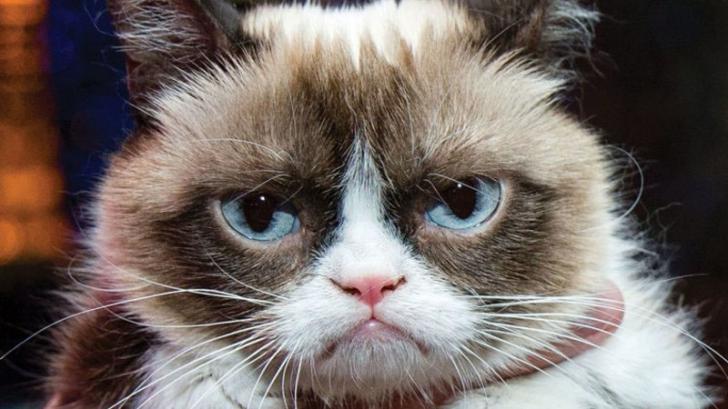 Grumpy Cat a câştigat în instanţă despăgubiri record