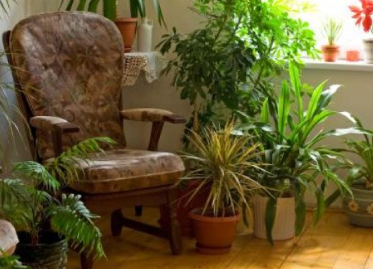 Plantele care UCID. Vampirii energetici pe care îi ţinem în apartament