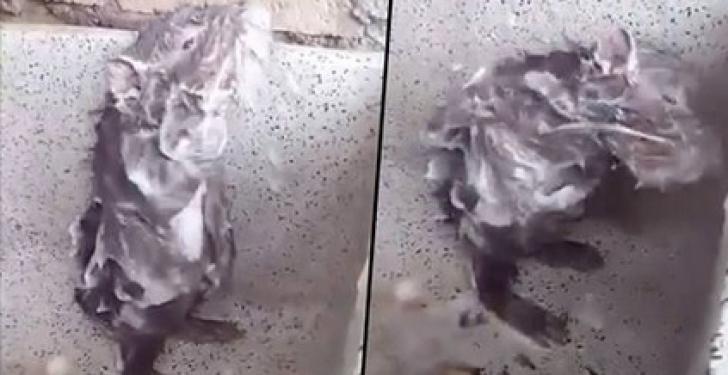 Adevărul cutremurător din spatele filmuleţului cu şobolanul la duş