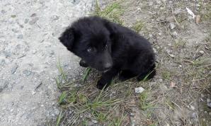 Câinii de la Cernobîl. FOTO: Solo East