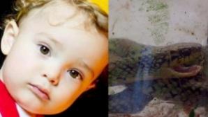 Un bebeluș a mușcat dintr-un șarpe veninos. Ce a urmat întrece orice imaginație!