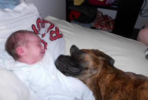 Şi-au lăsat copilul singur cu câinii şi au încuiat uşa. Când s-au întors, părinţii au găsit...