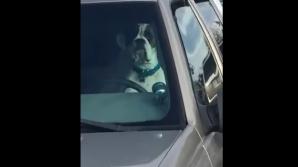 Un câine cu atitudine! Lăsat în maşină, şi-a claxonat stăpânul minute în şir