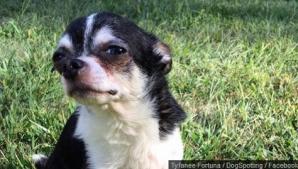 Povestea terifiantă a câinelui care şi-a mâncat stăpâna de foame. Acum, Internetul îl adoră! Motivul