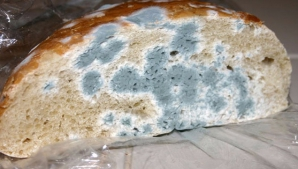 Ce întâmplă în corpul tău dacă mănânci pâine mucegăită? Este mai rau decât credeai!