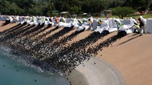 Au aruncat 96 de milioane de mingi negre de plastic în apă. Motivul, halucinant!
